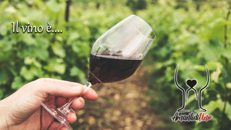 Il vino è…dove trovare bellissime frasi sul vino